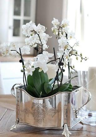 6 Beautiful Phalaenopsis Orchid Arrangements