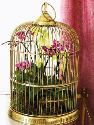 orchid arrangements in a hanging birdcage