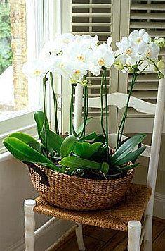 orchid arrangements using a basket