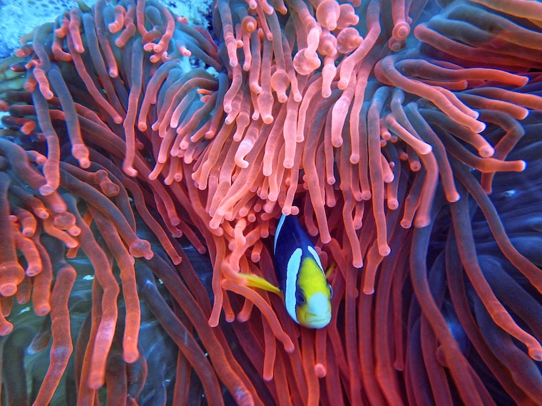 living-coral-fish
