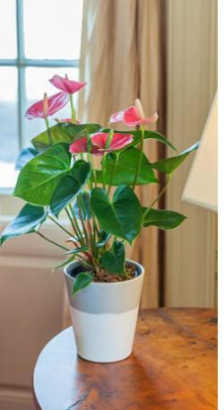 low-maintenance-plants-1