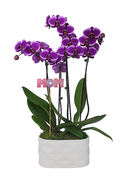 mothers-day-orchid-planter