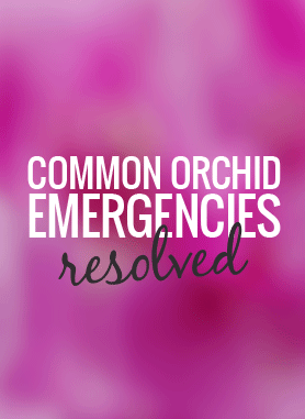orchid-care-emergencies-resolved.png