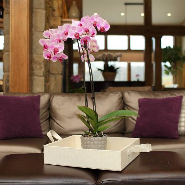 orchid-decor