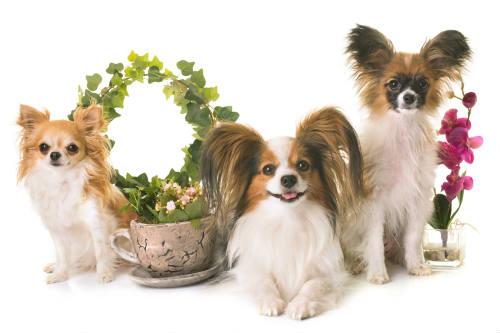 pet-safe houseplants