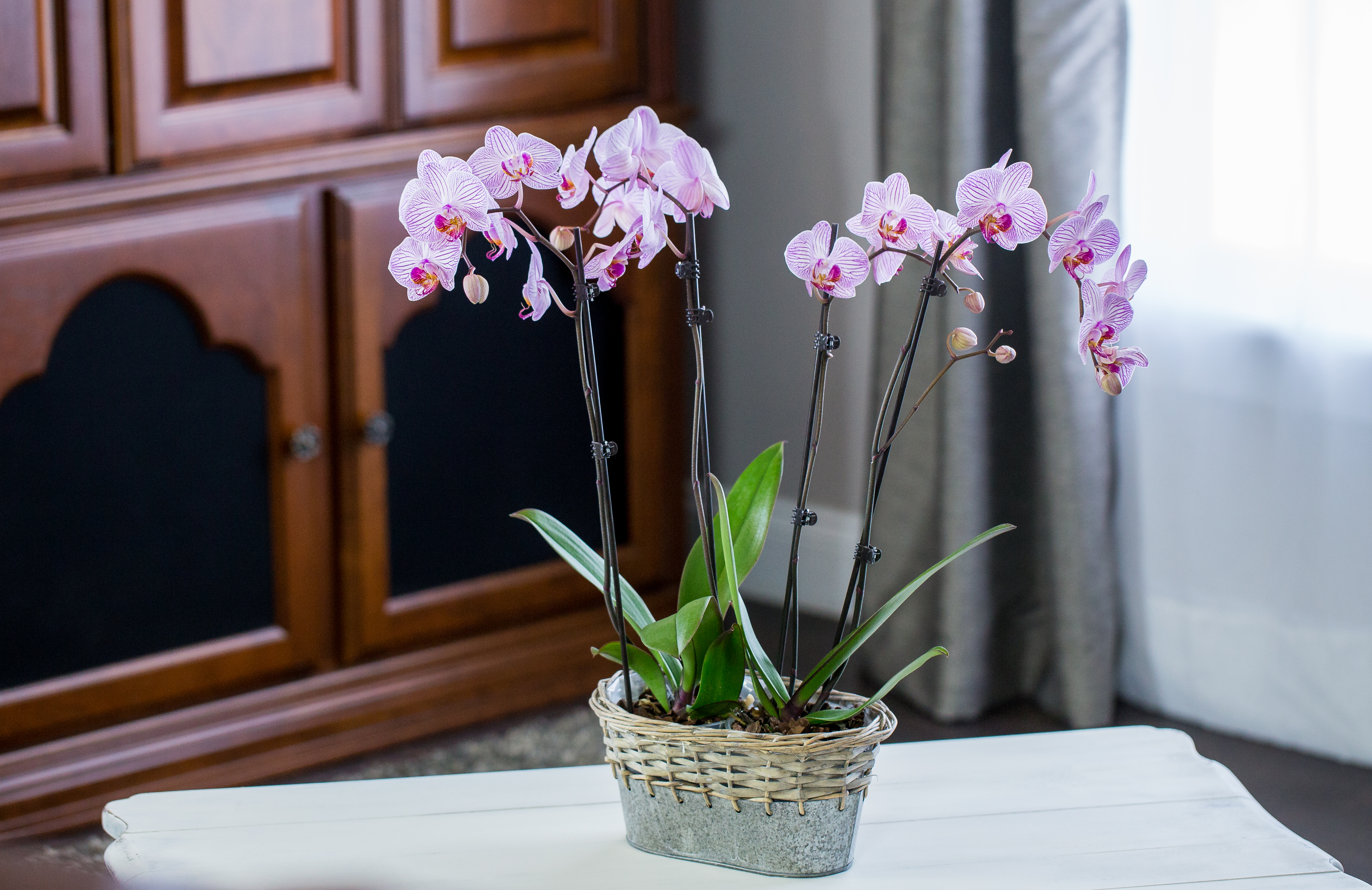 orchid-planter-1