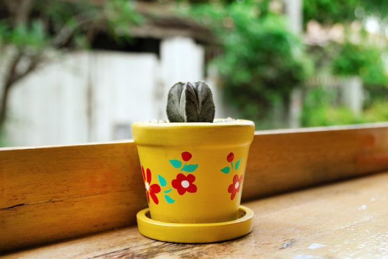 plant-lady-pot