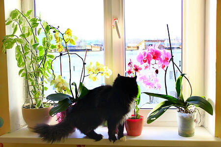 pet-safe houseplants