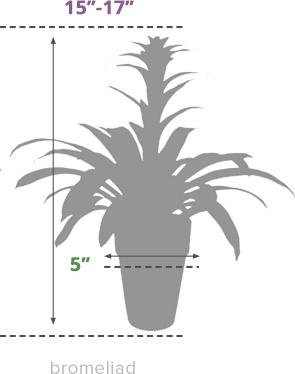 Size Guide Bromeliad
