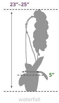 Size Guide Waterfall Orchid