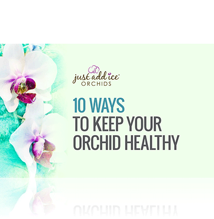 thumb-10-ways-orchid-health.png