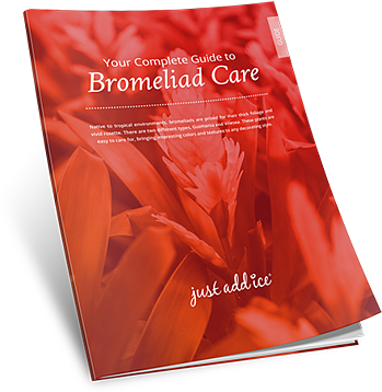 Bromeliad Care Guide
