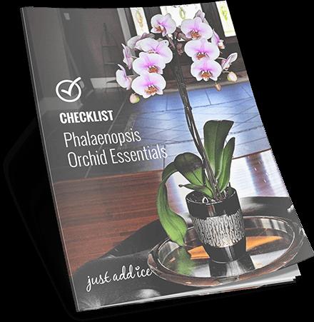Checklist Phalaenopsis Orchid Essentials