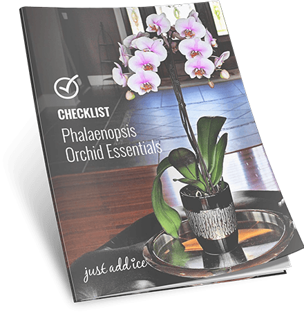 Checklist Phalaenopsis Orchid Essentials