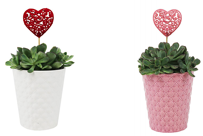 valentines-day-succulents