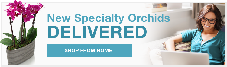 New specialty orchids delivered - Shop from home!