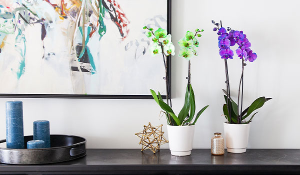 Brighten Your Home With These Spring Pantone Color Trends