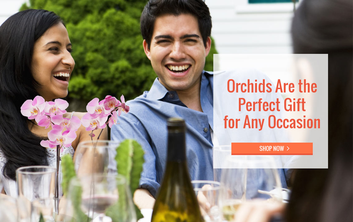 Orchids are the Perfect Gift