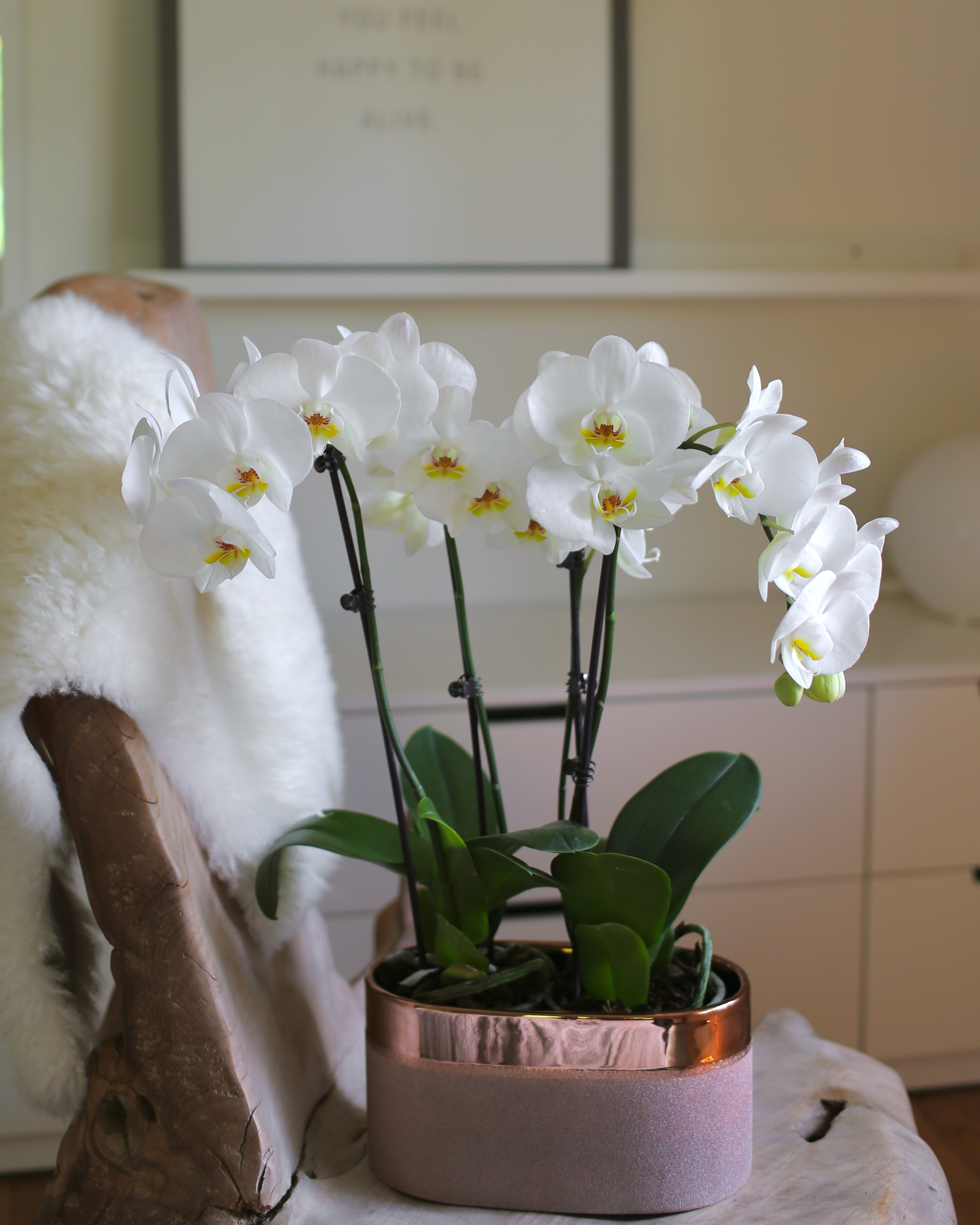 Orchid Care in Winter Months