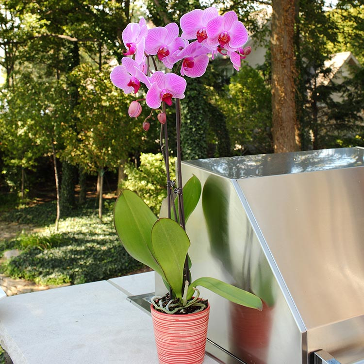 Light and Water to Care for Orchids