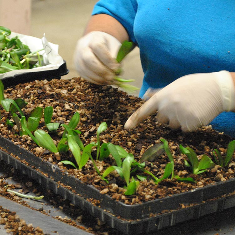 Sphagnum Moss vs. Bark: Which is Better for Phalaenopsis Orchids?