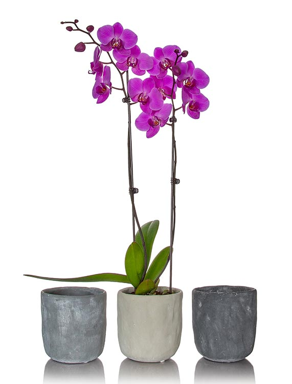what types of containers can be used to repot orchids. Black Bedroom Furniture Sets. Home Design Ideas