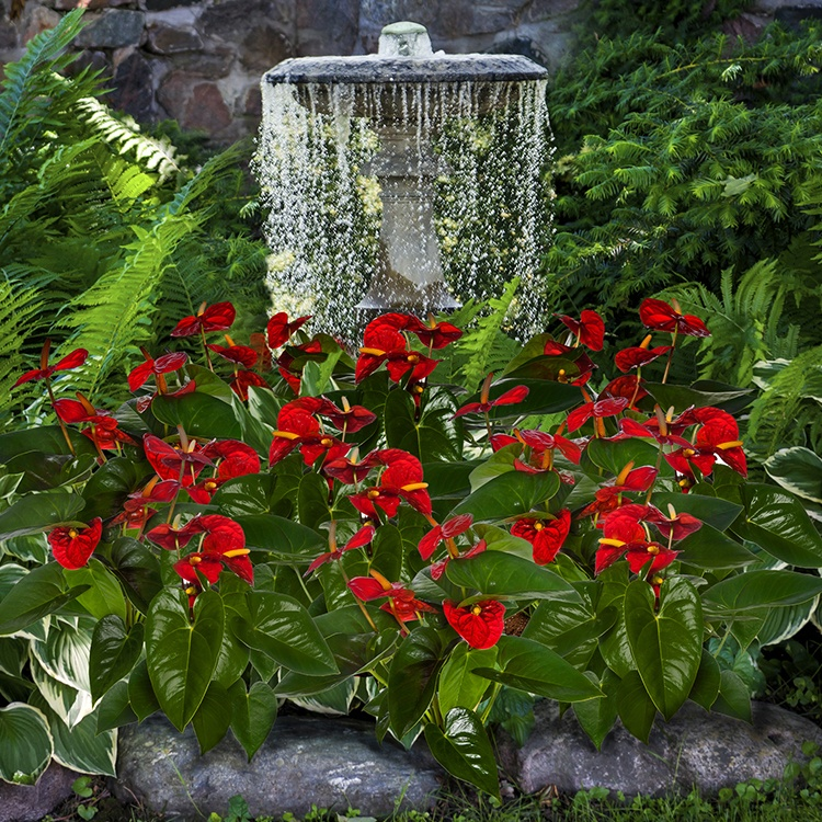 Check Out These Awe-Inspiring Anthurium Displays