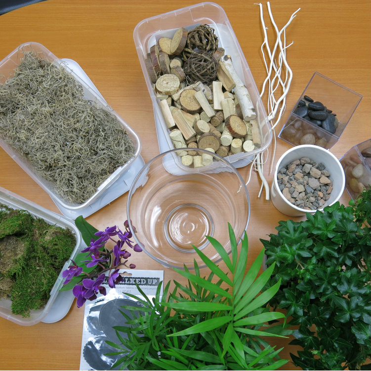 Help Your Plant Thrive With This Diy Orchid Terrarium