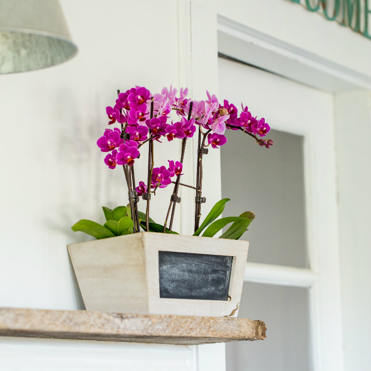 4 Simple Ways to Decorate Your Home Like a Professional