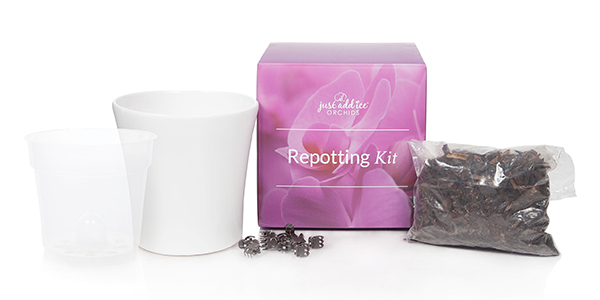 Repot Your Phalaenopsis Orchid Easily with our New Repotting Kit