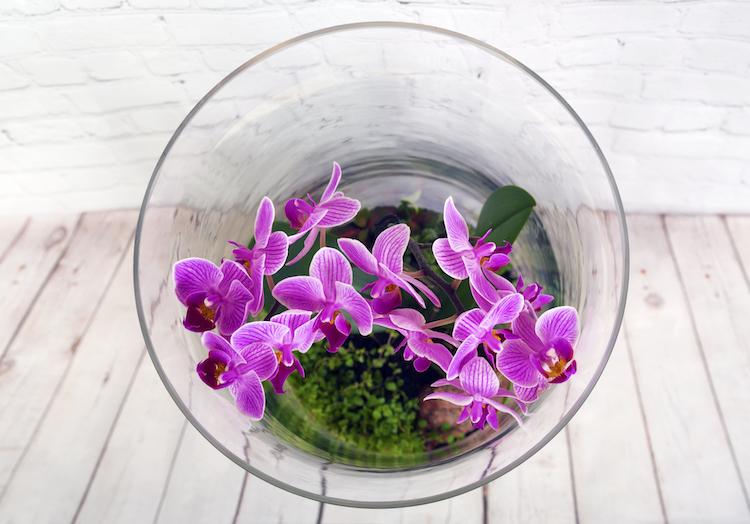 The Best Indoor Plants For Your Terrarium