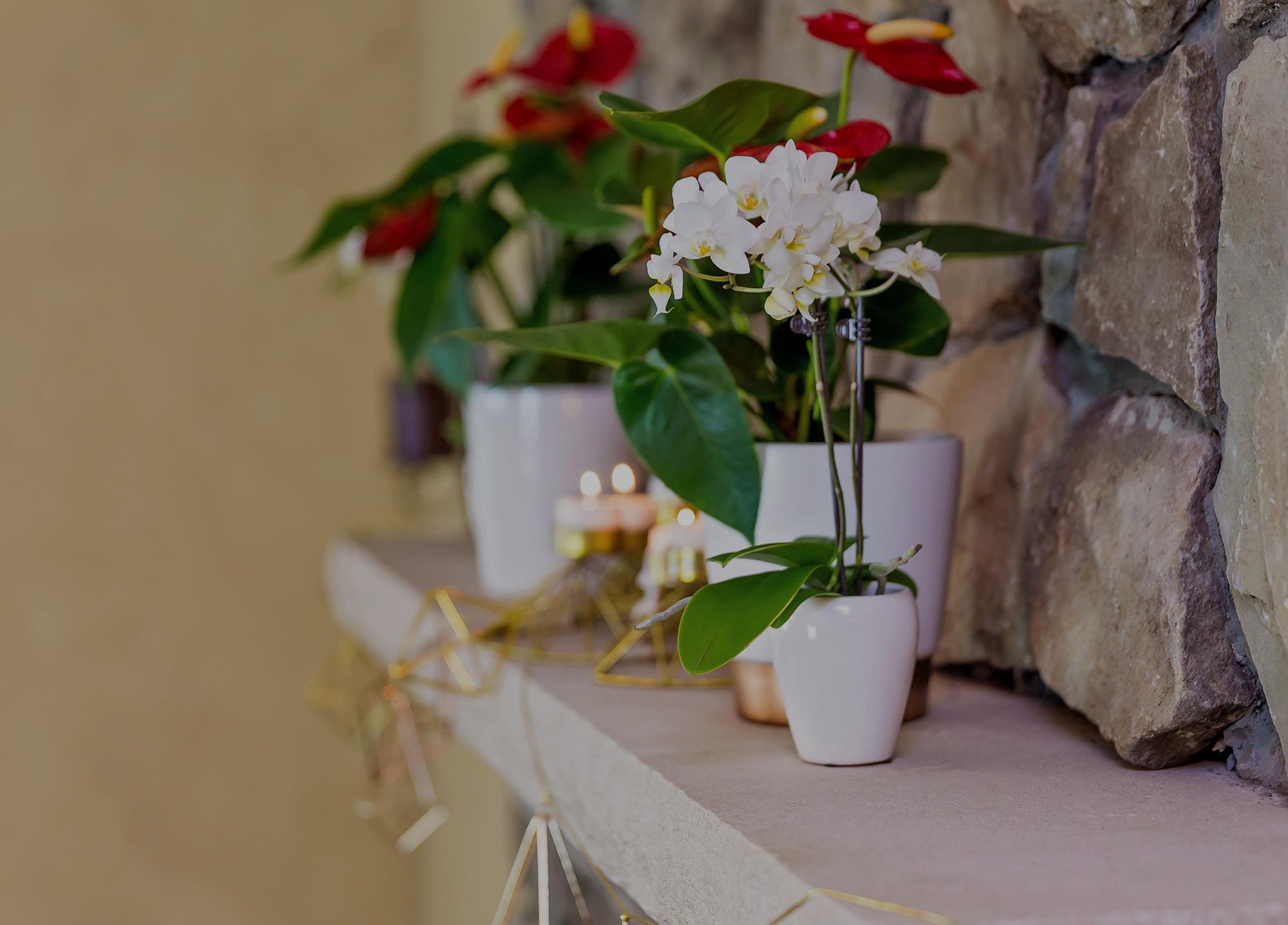 Poinsettia Alternatives for Holiday Decor