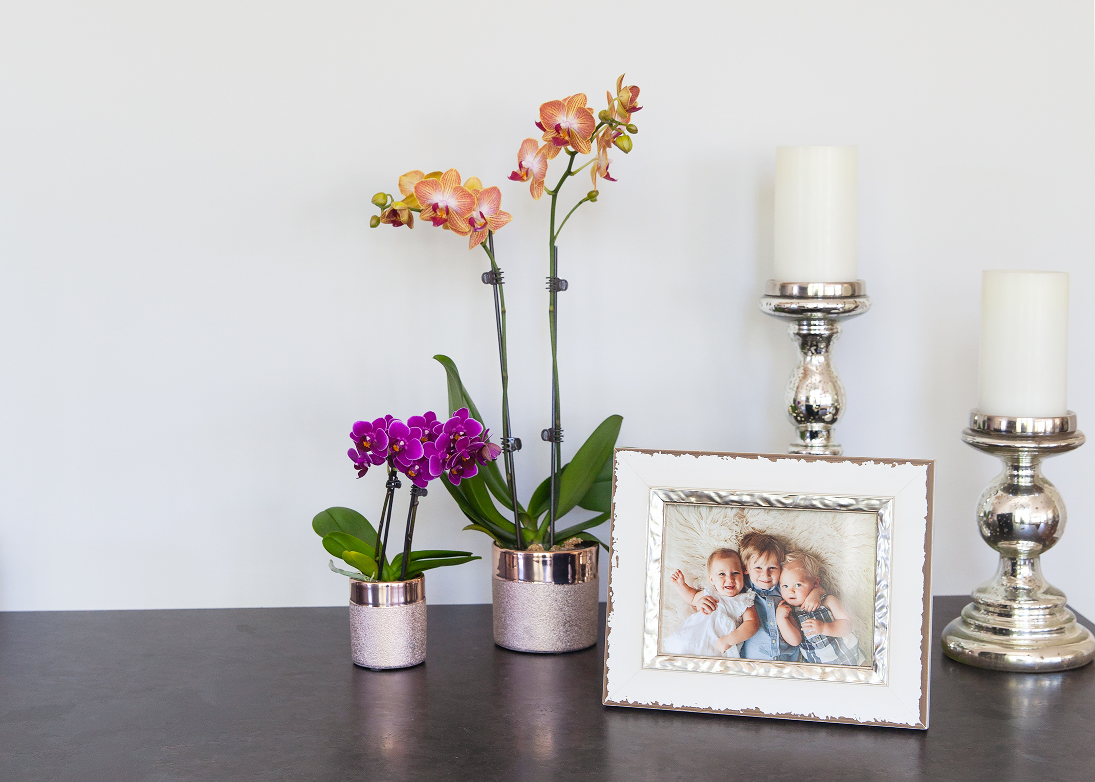 5 People Who Need A Mini Orchid In Their Lives