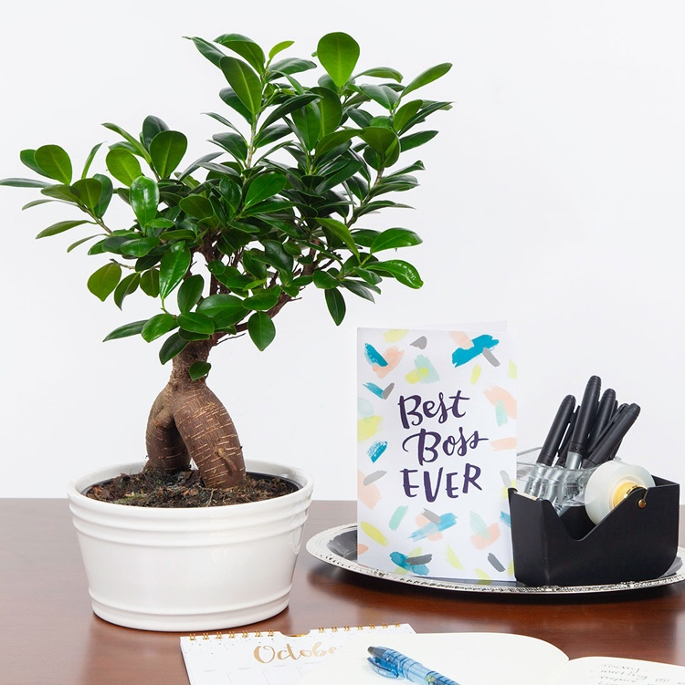 The Best Potted Plants to Celebrate Boss's Day