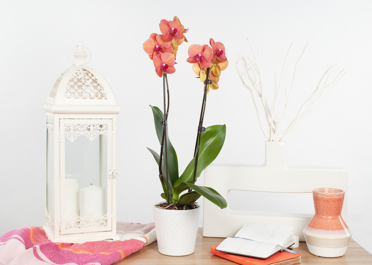 Decorate with Pantone's Color of the Year: Living Coral