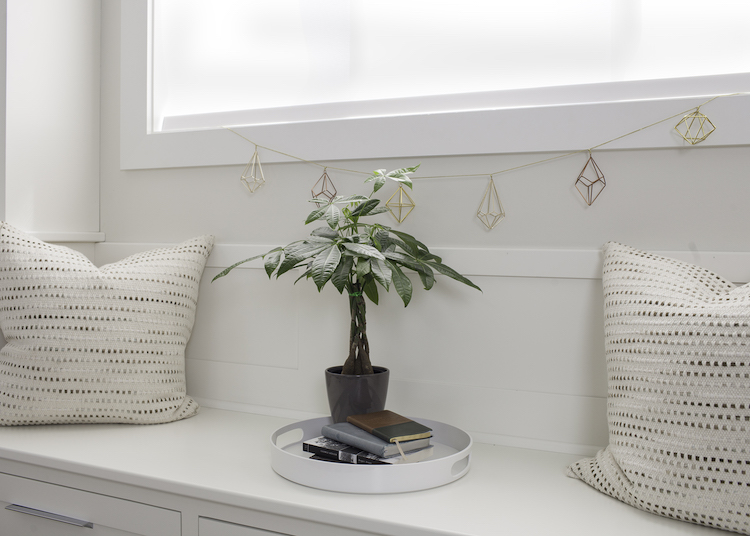 6 Occasions to Gift A Money Tree Plant