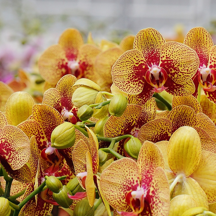 Slideshow: 3 Simple Orchid Care Tips for Fall