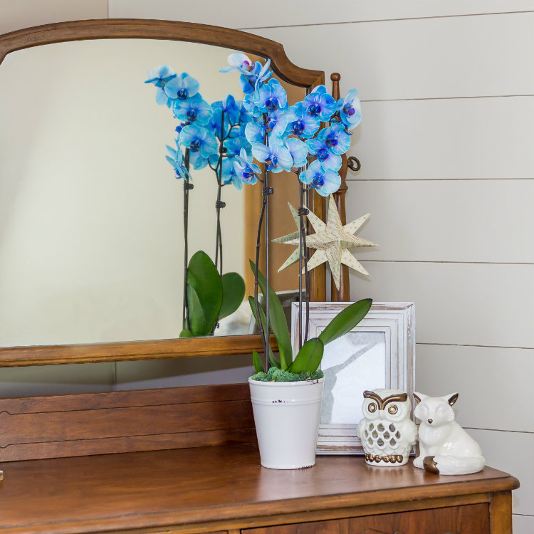 The Right Orchid Size for Every Occasion