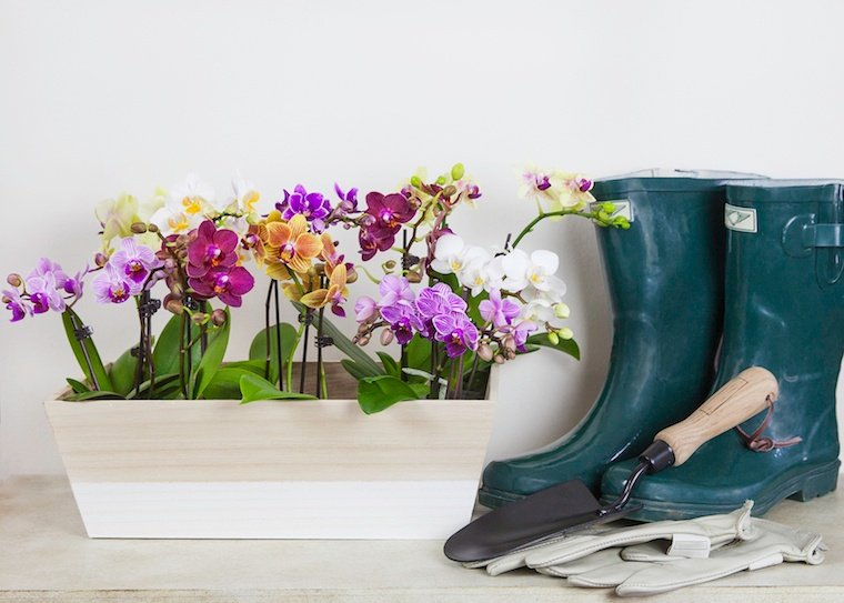 How to Find The Best Orchid Color For You