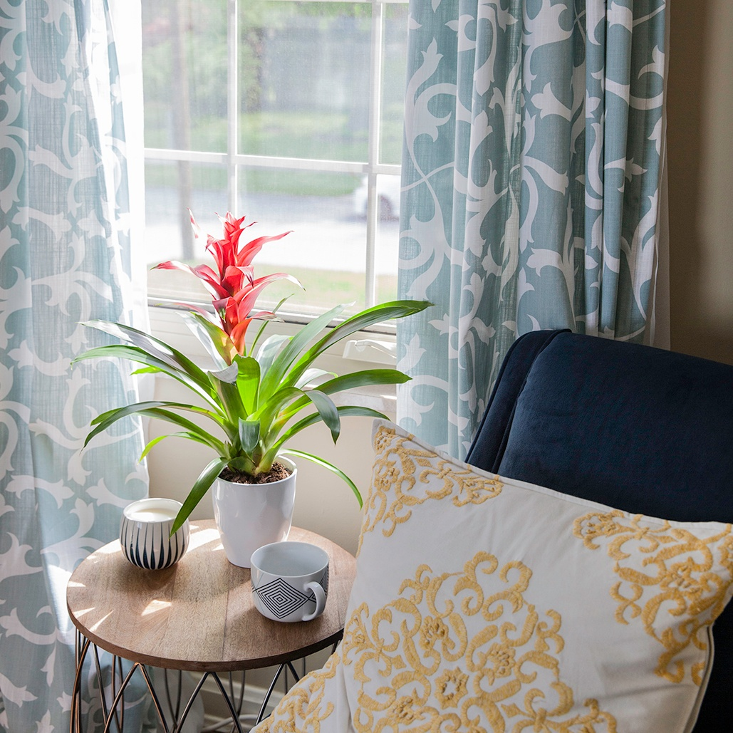 Do Bromeliads Rebloom?