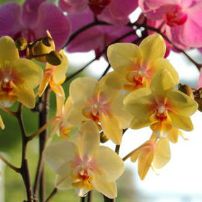 Your Ultimate Playlist for Growing Orchids