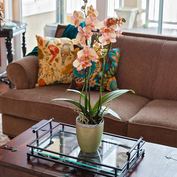 6 Simple Ways to Incorporate Plants Into Your Living Room Décor