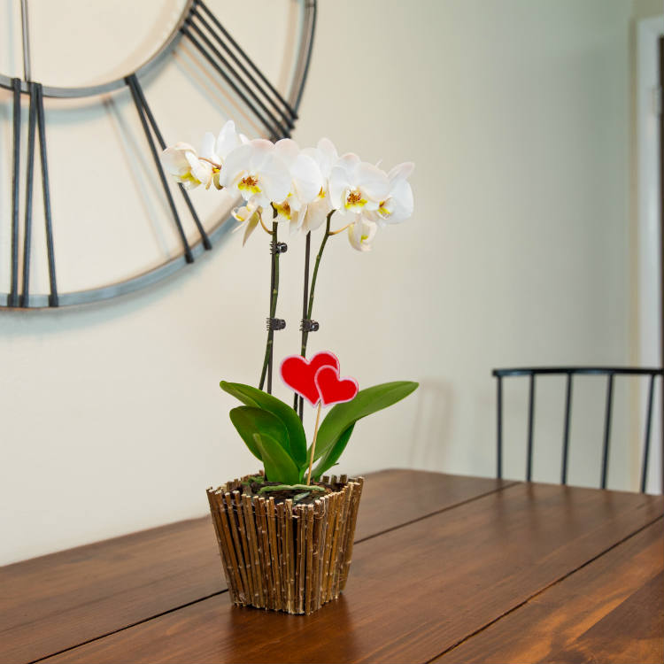 I Received an Orchid for Valentine's Day—Now What?