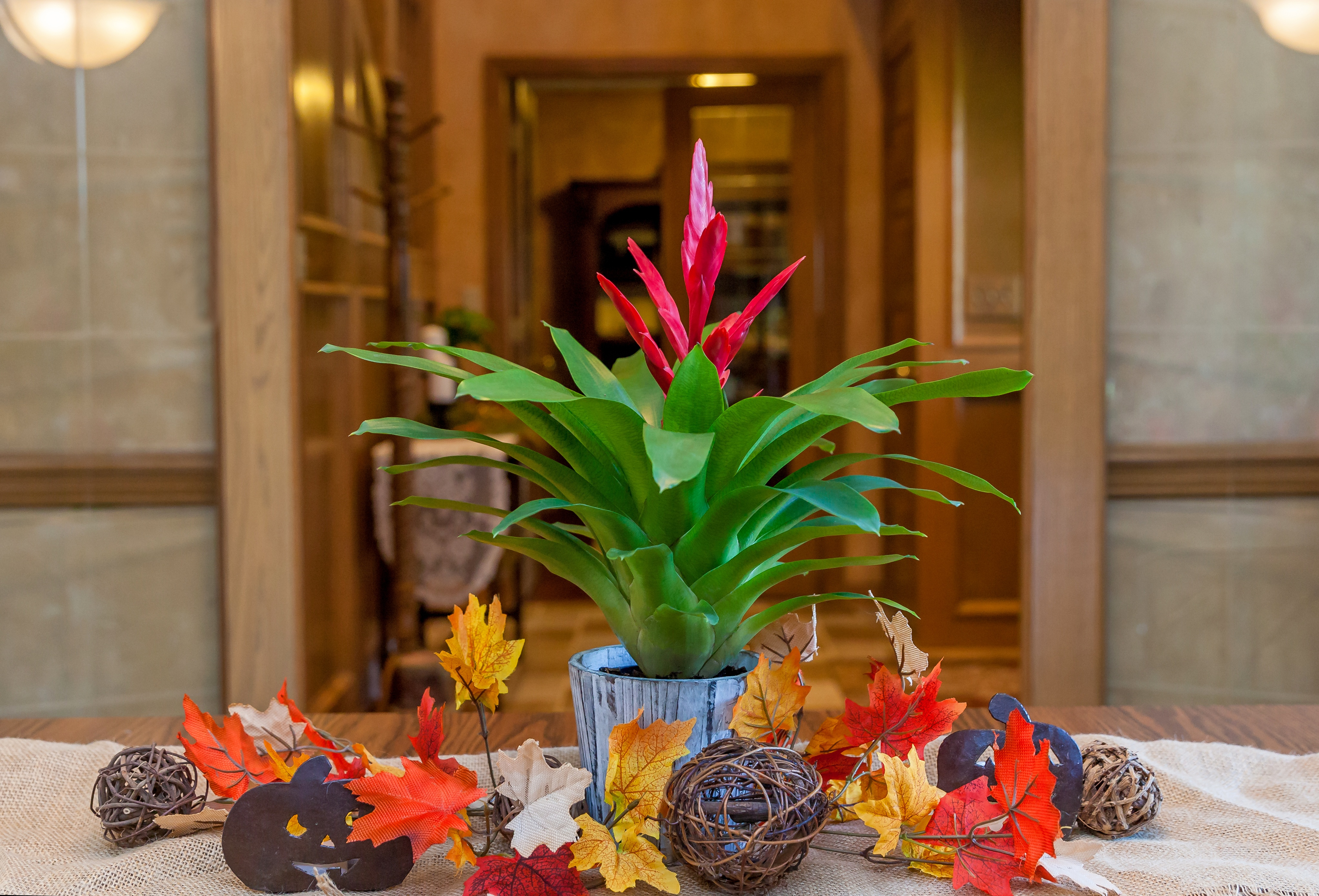 3 Ways to Showcase Your Bromeliad In Your Fall Home Decor