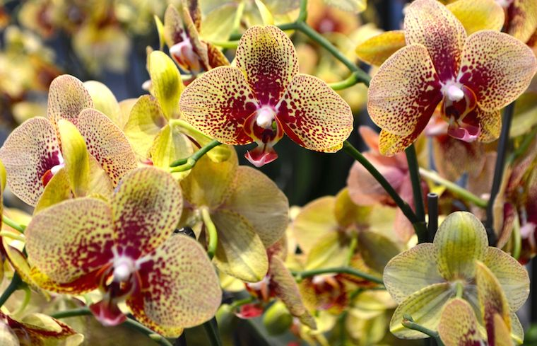 Highlights from Orchid Mania in Cleveland [Gallery]