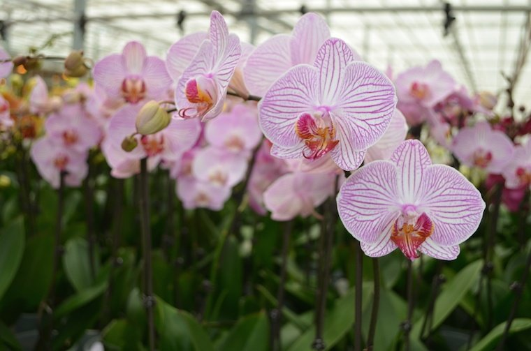 How Do Orchids Grow Fascinating Life Cycle Of Growing Orchids
