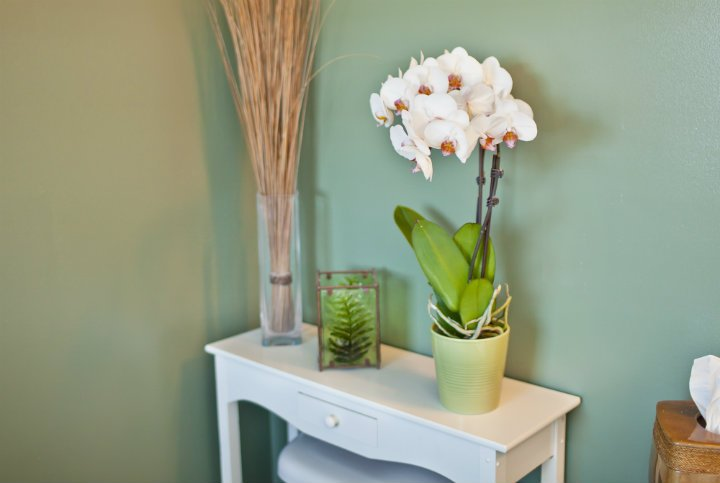 Taking Care of Your Orchid: What Are Air Roots?