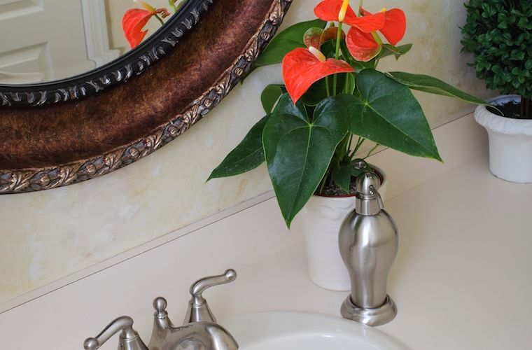 The 6 Biggest Anthurium Care Mistakes (And How to Avoid Them)