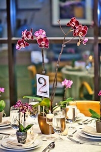 3 Ways to Brighten up Your Events with Mini Orchids