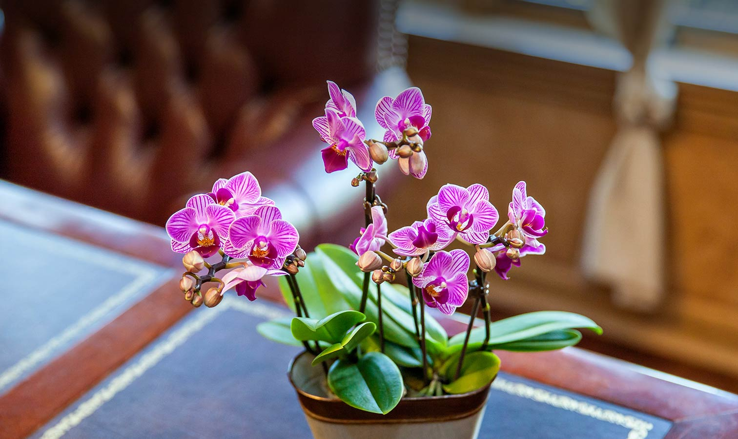 The Best Plants For Your Home Office
